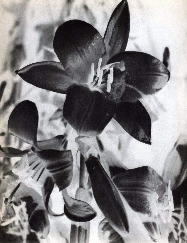 man ray solarized flowers 1934